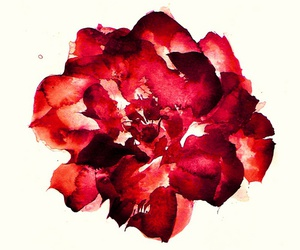 art, red, and flower image