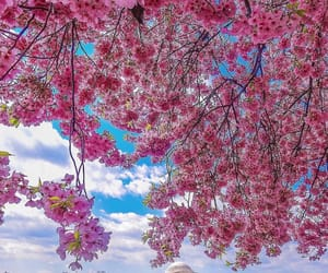amazing, flowers, and spring image
