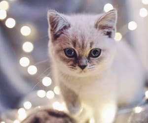 adorable, kitty, and cute image