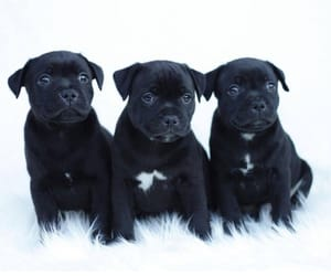 adorable, animal, and puppy image