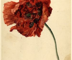 flowers, poppy, and art image