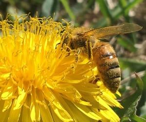 animal, beautiful, and bee image