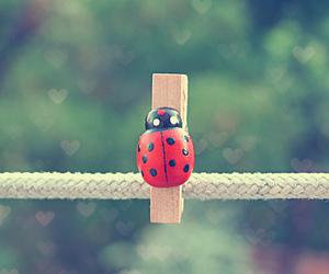 bokeh, ladybug, and cute image