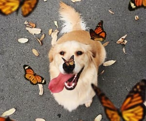 beautiful, dog, and butterfly image