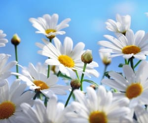flower, nice, and photography image
