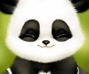 panda, cute panda, and cute image