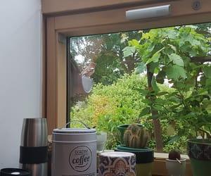 bird, coffee, and cactus image