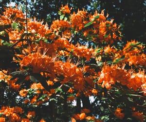bright, orange, and warm image