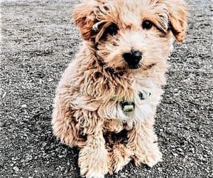 adorable, animal, and furry image