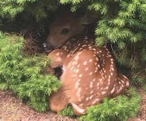 baby animals, baby deer, and cute animals image