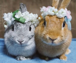 cute, bunnies, and floercrowns image