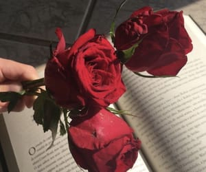 books, roses, and love image