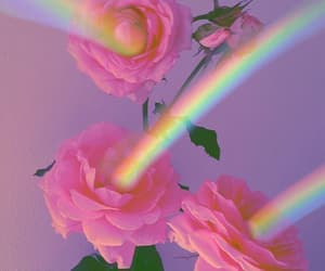 rainbow, rose, and pink image
