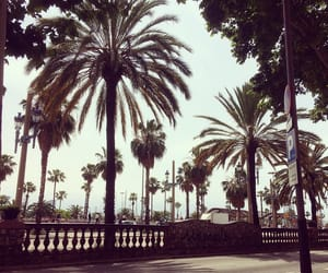 Barcelona, chill, and palm image