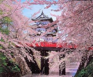 japan, sakura, and castle image