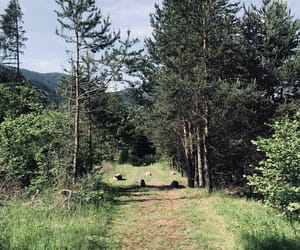 forest, green, and health image
