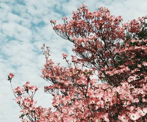 morning, spring, and tumblr image