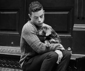 dog, rami malek, and rami image