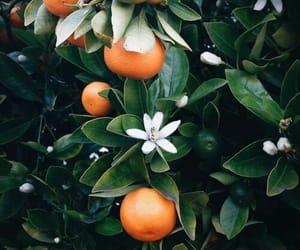 orange, nature, and plants image
