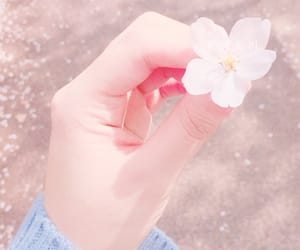 aesthetic, background, and flower image