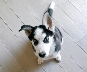 black&white, dog, and puppy image