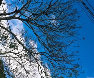 blue, feed, and sky image