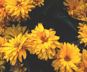 flowers, yellow, and backround image