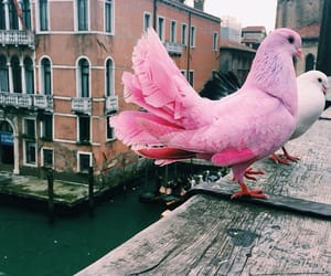 pink, bird, and animal image