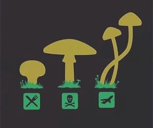 acid, mushroom, and psychedelic image