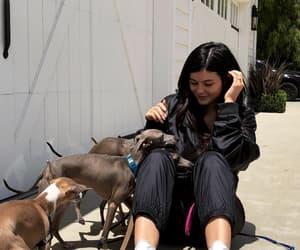dog, jenner, and kylie jenner image