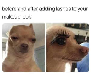 dog, funny, and lashes image