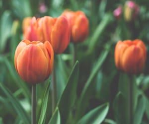flowers, easel, and tulips image