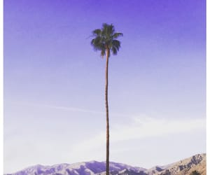 mountains and palms image