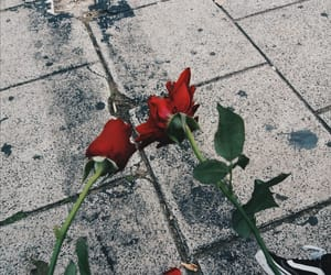 red, roses, and sad image