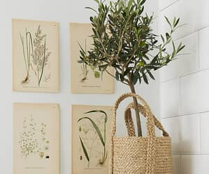 home decor, olive tree, and interior design image