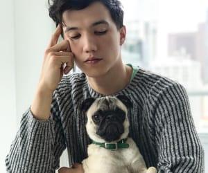 aaron, asian, and pug image