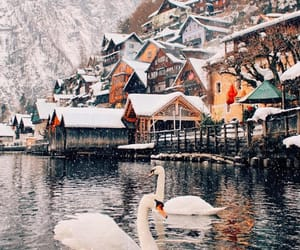 city, swans, and winter image