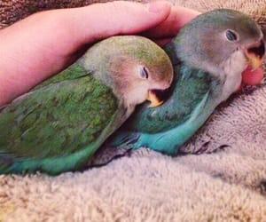 bird, animal, and aesthetic image