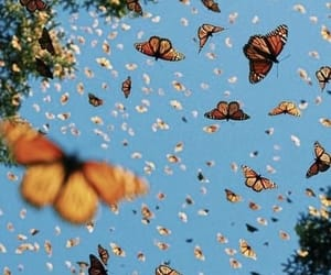 butterfly, nature, and beautiful image