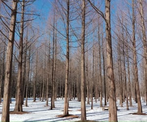 winter, south korean, and nami island image