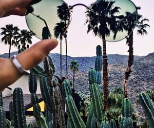 palm, sunglasses, and summer image