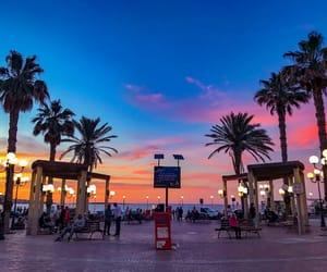 beauty, palm trees, and twilight image