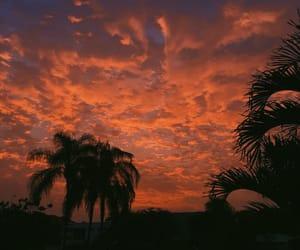 palm tree, sky, and sunset image