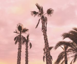beach, palm tree, and photography image