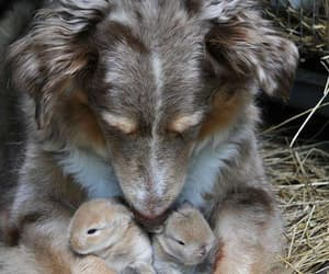 dog, cute, and bunny image