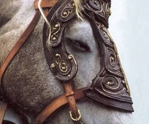 aesthetic, animal, and horse image