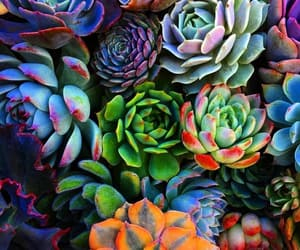 beautiful, Best, and succulents image