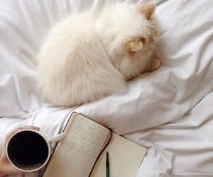 coffee, kitten, and pastel image