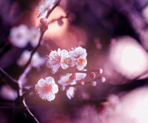flower, nature, and spring image