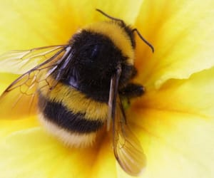 yellow, cute, and bee image